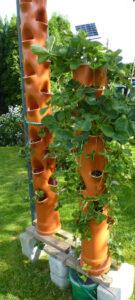 Foto der Pflanzsäulen